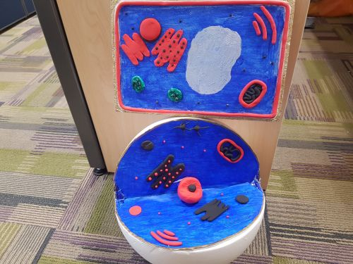 Project ANimal and plant cell